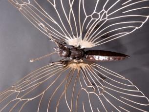 Métamorphose IV – Papillon – vue de dessus