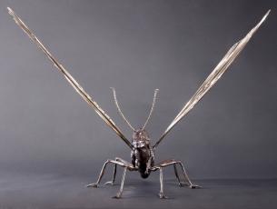 Métamorphose IV – Papillon – vue 2